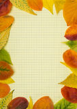 Back to school.School notebook and frame of autumn leaves Stock Images