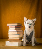 Back to School Student Dog Royalty Free Stock Photos