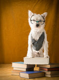 Back to School Student Dog Royalty Free Stock Photo