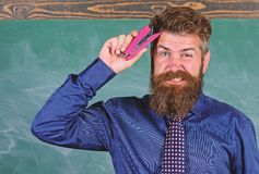 Back to school and studying. Teacher bearded man with pink stapler chalkboard background. Pin it on mind. Teaching. Memorization techniques. Hipster teacher royalty free stock photos