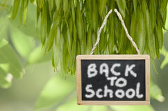 Back to school- written on black chalk board hanging from a tree Royalty Free Stock Images