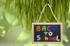 Back to school- written on black chalk board hanging from a tree. Colourful letters Stock Illustration