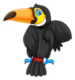 Back of toucan bird Stock Photo