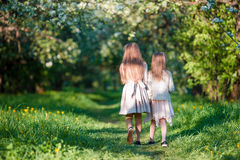 Back view of adorable girls walking in blooming apple garden on sunny spring day Royalty Free Stock Images