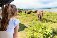 Little girl on safari stock photography