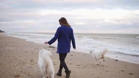 Back view of attractive young woman running with her dogs of the Samoyed breed by the sea. White fluffy pet on the beach. Having fun. Beautiful sky on the stock video