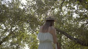 Back view of attractive young woman in straw hat and long white dress picking apples standing on a ladder in the green. Back view of an attractive young woman in stock video