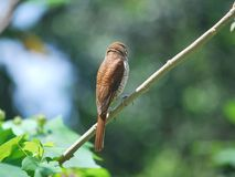 Back view of a bird Stock Photography