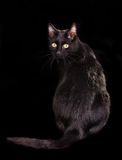 Back view of black cat, looking at camera stock image