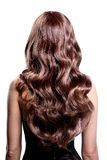 Back view of brunette woman with long black curly hair. Stock Photos