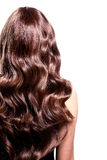 Back view of brunette woman with long black curly hair. Stock Photography
