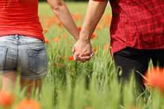 Back view of a couple holding hands in a field. Back view of a romantic couple holding hands in a field with red flowers stock photo
