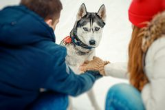 Back view of the couple holding hands and waiting for siberian husky to put the paw on them. Winter time. Stock Images