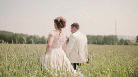 Back view of a couple in love walking in a wheat field holding hands on their wedding day. Beautiful wedding outfits stock video footage
