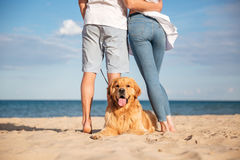 Back view of dog lying on beach near young couple Royalty Free Stock Images
