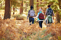 Back view of family hiking through forest, California, USA stock image