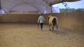 Back view of a female rider walking her horse on the farm stock video footage