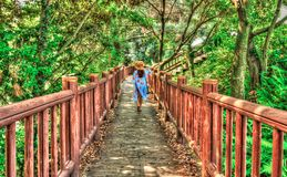 Back view of female tourist walking on path in the forest. Jeju, Korea royalty free stock photos
