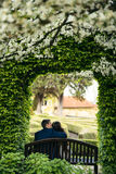 The back view of the groom kissing the bride in the forehead while sitting on the bench under the green blooming arch. Royalty Free Stock Image