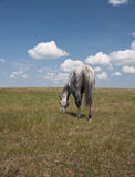 Back view of horse in field with clouds Stock Image