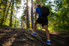 Back view of male hiker with backpack in forest. Back view of male hiker with backpack walking in forest Royalty Free Stock Photos