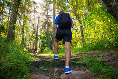 Back view of male hiker in forest. Back view of male hiker on forest road Stock Photography