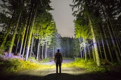 Back view of man with head flashlight standing on forest ground road among tall brightly illuminated spruce trees under beautiful stock images