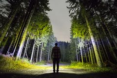 Back view of man with head flashlight standing on forest ground road among tall brightly illuminated spruce trees under beautiful stock image