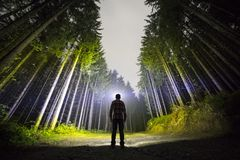 Back view of man with head flashlight standing on forest ground road among tall brightly illuminated spruce trees under beautiful royalty free stock photography