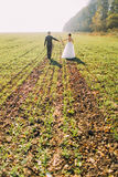 The back view of the newlyweds holding hands and walking in the green field. Stock Images
