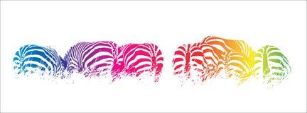 Rainbow zebras stock photo