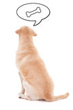 Back view of sitting dog thinking about food isolated on white Royalty Free Stock Images