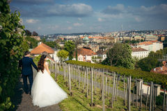 The back view of the stylishly dressed newlyweds holding hands while walking along the paving road near Prague panorama. The back view of the stylishly dressed Stock Image