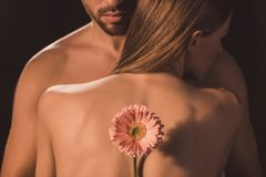 Back view of tender lovers hugging and holding gerbera flower,. Isolated on brown royalty free stock images