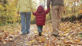 Toddler boy walking with grandparents in autumn. Back view of toddler boy in red jacket walking with grandparents on park alley in colorful autumn landscape stock video
