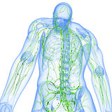 Back view of Transparent lymphatic system. 3d art illustration of back view of Transparent lymphatic system of male Royalty Free Stock Photo