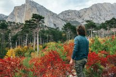 Man traveling in autumn forest by the mountain Stock Photography