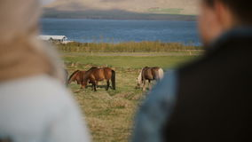 Back view of two people visiting the animals farm. Business partners talking about Icelandic horses. Scenic landscape of mountains and sea, wild horses grazing stock footage