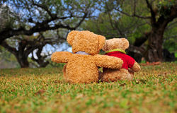 Back view of two teddy bears sitting in the garden with love. Stock Images