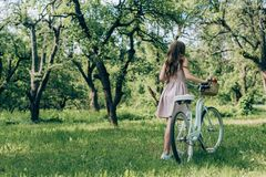 Back view of woman in dress holding retro bicycle with wicker basket full of ripe apples. At countryside stock photos