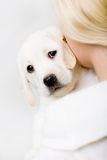 Back view of woman embracing puppy of labrador. Back view of woman in white sweater embracing White puppy Royalty Free Stock Images
