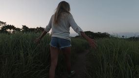 Back view of woman walking through a field touching green high grass stock video footage