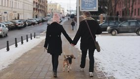 Back view of young stylish couple walking with dog in street. Man and woman happy together. Dog beagle. Autumn season. Casual style. Slow motion stock video