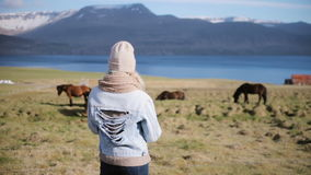 Back view of young stylish woman standing on the nature and looking on the Icelandic horse grazing on a field. stock footage