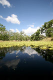 Back waters of Florida. A photo from a canoe in taken in old Florida at Fish Eating Creek Stock Image