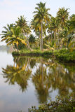 Back Waters in Kerala Stock Images