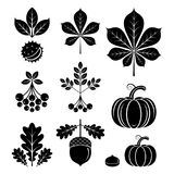 Back and white autumn icons. Vector illustration. Back and white autumn icons in modern line style. Vector illustration on a white background royalty free illustration