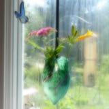 Back Window Stock Images