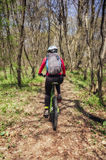 The back of a woman cycling in the forest. Active woman cycling forward into the forrest on a sunny afternoon Royalty Free Stock Photo