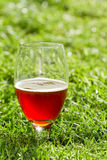 Back yard beer Royalty Free Stock Images